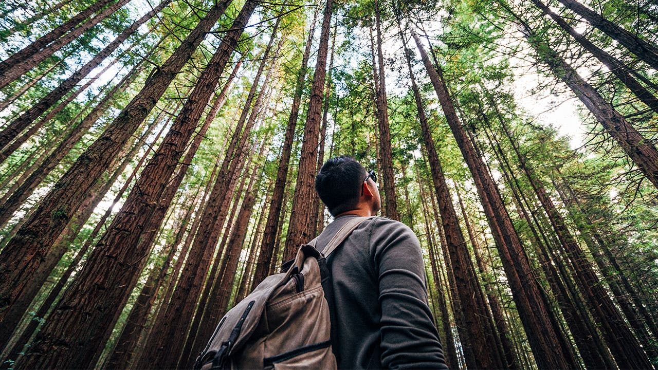 Man looking up at trees in forest