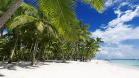 Most big firms use offshore tax havens