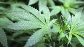 Taxes paving the way for legal pot