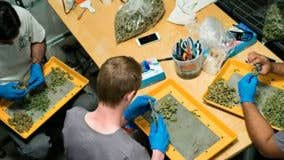 Legal weed could bring in $28B a year in taxes