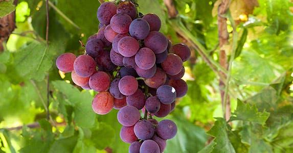 Grapes, tomatoes © JManuel Murillo/Shutterstock.com