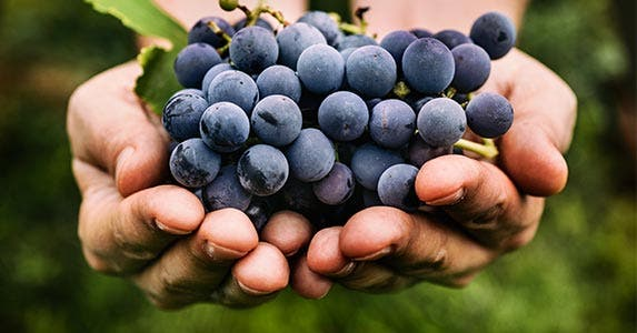 Grapes © mythja/Shutterstock.com