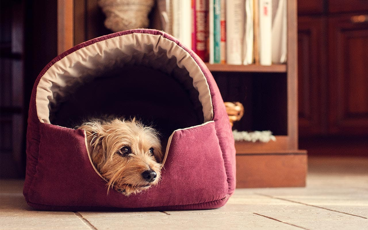 Aspen Pet Sofa for Dogs & Cats | Jody Trappe Photography/Getty Images