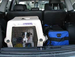 Keep pets properly restrained