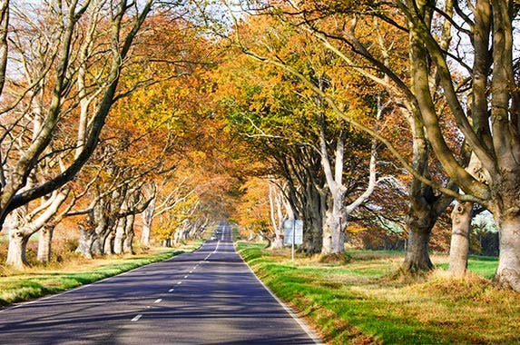 Fall season's top auto hazards © Joe Dunckley/Shutterstock.com