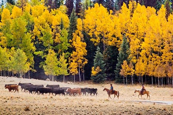Midwest © Arina P Habich/Shutterstock.com