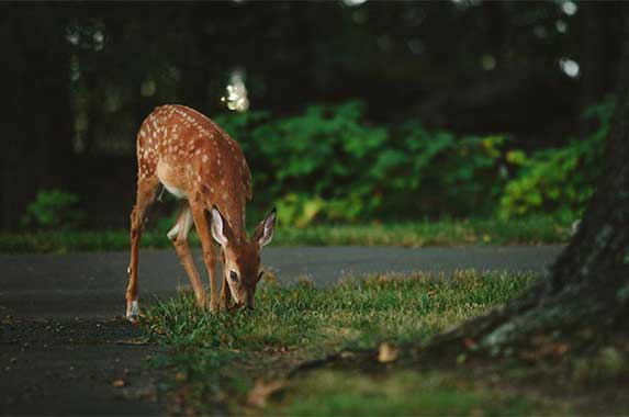 10 worst states for deer crashes | Vladimir Kudinov/Unsplash