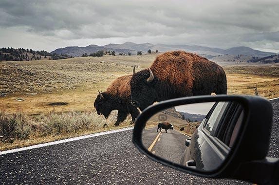 Wyoming   Maciej Bledowski/Shutterstock.com