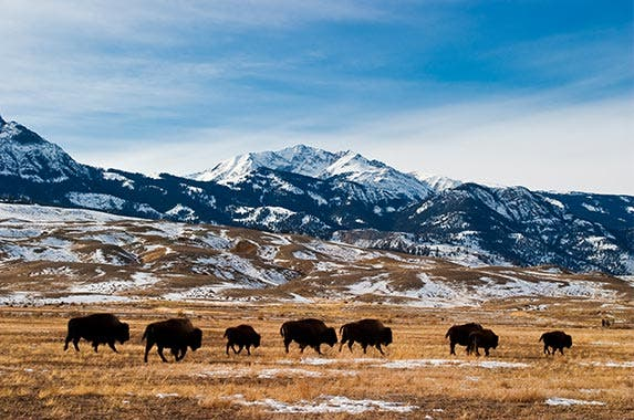 No. 8: Montana | Mark Miller Photos/Getty Images