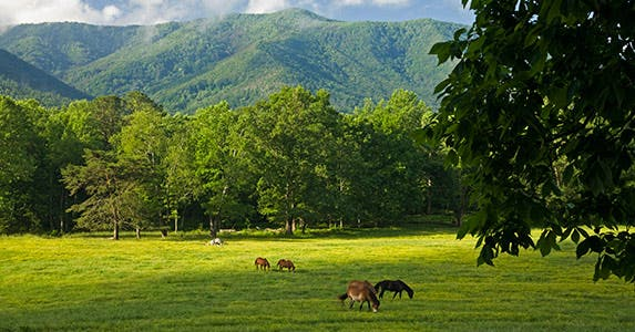 Great Smoky Mountains National Park © iStock