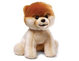 Boo -- The World's Cutest Dog
