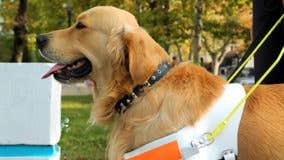 Apartments ban pets, allow service animals