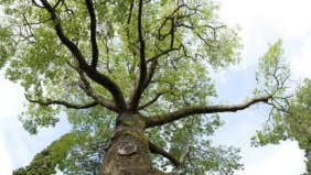Who is liable for invasive tree roots?