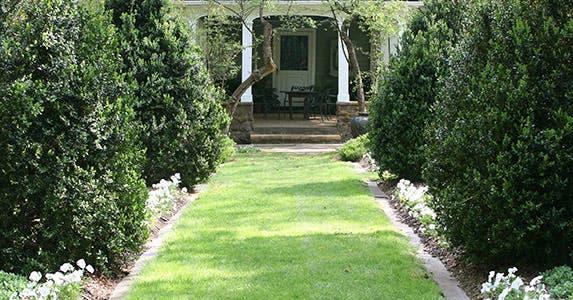 Plant evergreens © iStock