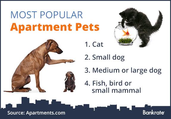 Most popular apartment pets © Bigstock
