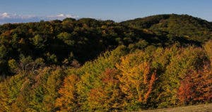 Rolling hills and autumn trees | Spaces Images/Getty Images