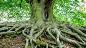 Seller asks if 'unstable' trees must be disclosed as defect to homebuyer