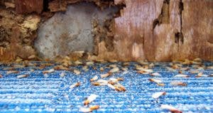 Termites | ChristianNasca/E+/Getty Images