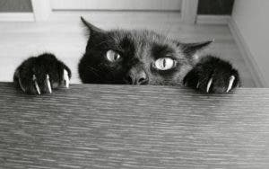 Black cat hanging from counter