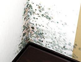 Mold © RioPatuca/Shutterstock.com