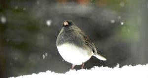Snowbird © Denise Weant/Shutterstock.com
