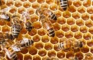 Bees in honeycomb © satephoto/Shutterstock.com
