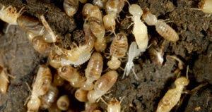 Termites © iStock