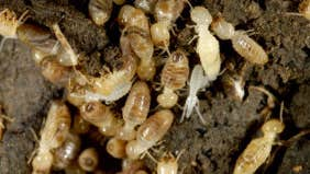 Does my insurance cover termites?