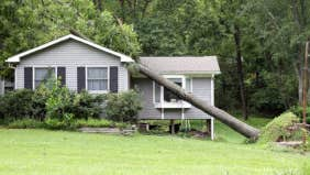 What home insurance protects from falling trees?