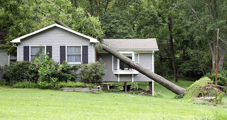 What Home Insurance Protects From Falling Trees