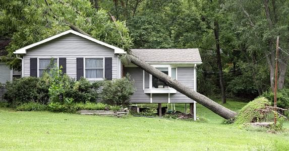 Fallen tree on house roof © iStock