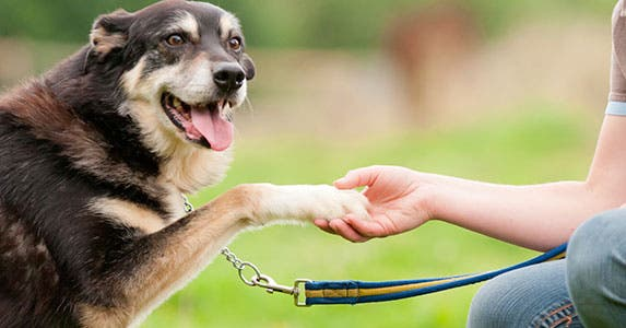 Even older pets can get coverage © iStock