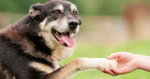 Dog shaking paws with human friend © iStock