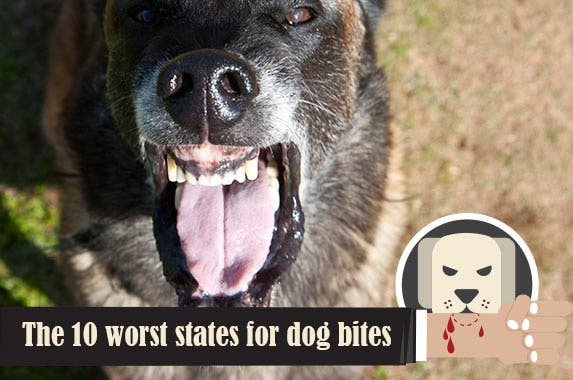 The 10 worst states for dog bites © iStock