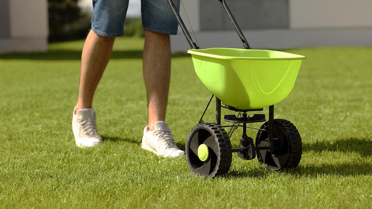 Person seeding the lawn