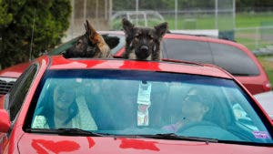 dogs looking out of sunroof