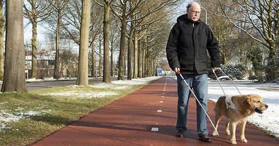 Pet-related tax write-offs: Medical deduction © Jeroen van den Broek/Shutterstock.com