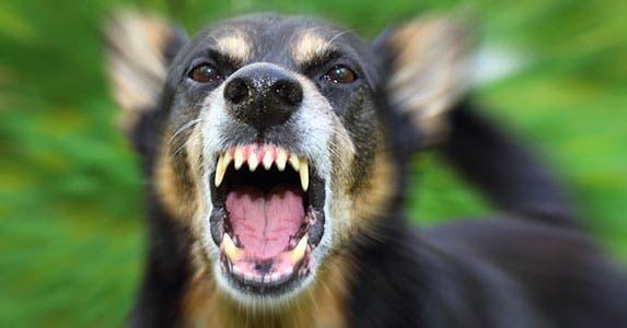 Pet-related tax write-offs: Business animals © Verkhovynets Taras/Shutterstock.com