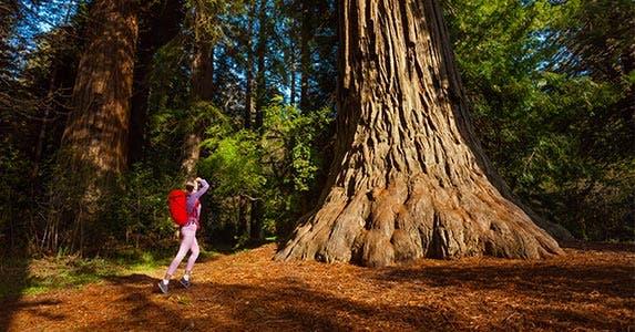 California | Sergey Novikov/Shutterstock.com