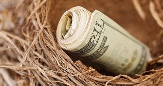 Roll of $20 bills in nest © martellostudio/Shutterstock.com