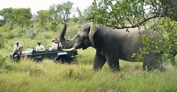 Elephant and tour guides in African safari | David De Lossy/Photodisc/Getty Images