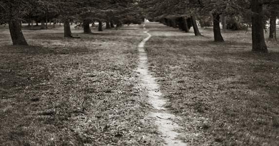 Forest path © Steve Lovegrove/Shutterstock.com