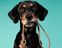 Dog biting on its leash
