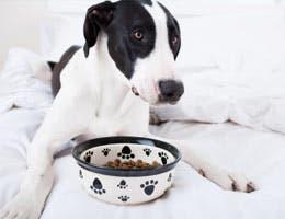 Dog and dog food bowl