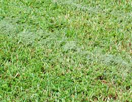 Leave the cuttings on your lawn