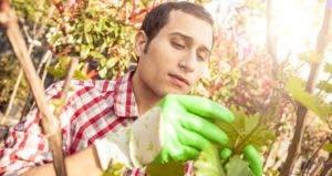 Male landscape architect inspecting plant | Leonardo Patrizi/E+/GettyImages