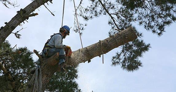 No. 2: Lumberjack