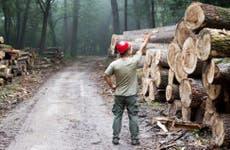 Lumberjack standing in front of stacked trunks in forest © Budimir Jevtic/Shutterstock.com