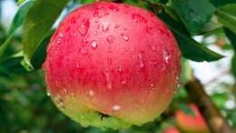 Taking the organic food plunge