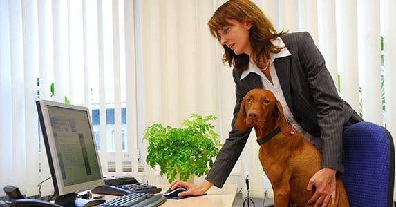Pet insurance © Wolfgang Zintl/Shutterstock.com